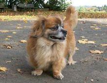 Zum Gedenken An Den Kleinen Hund Joschi 84 Sprüche Zu Den